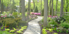 LAKE BLUFF  WOODLAND  SHADE GARDEN